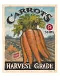 Fresh Carrots Print by K. Tobin