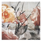 Days of Roses Giclee Print by Matina Theodosiou