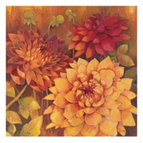 Autumn Dahlias 2 Prints by Vera Hills