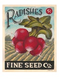 Ravishing Radishes Giclee Print by K. Tobin
