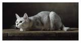 Silver Burmilla Cat Poster by Yann Arthus-Bertrand