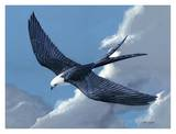 Swallow Tailed Kite Art by Keith Freeman