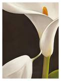 Calla moderna I Posters by Serena Biffi