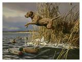 Brown Lab Retrieving Prints by Tom Beecham