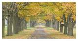 Country Road Lined by Trees in Autumn Prints by  Owaki-Kulla