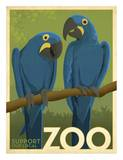 Zoo Maccaw Posters por Anderson Design Group