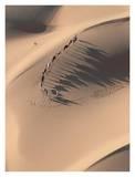 Camel Caravan in the Sahara Desert, Mauritania Posters af Yann Arthus-Bertrand