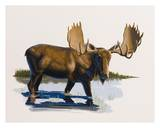 Moose Art by Keith Freeman