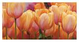 Summer Tulips Prints by Luca Villa