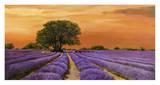 Campo al tramonto Print by Valerio Sella