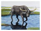Wild Asiatic Buffalo Print by Keith Freeman