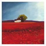 Field of poppies Print by Philip Bloom