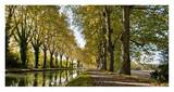Trees growing by river in park Prints by Howard Kingsnorth