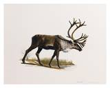 Caribou Print by Keith Freeman