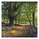 Luce nel bosco Prints by Adriano Galasso