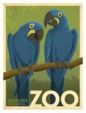 Zoo Maccaw Prints by  Anderson Design Group