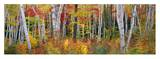 Autumn in Shelburne Forest Posters by James Randklev