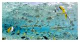 Michele Westmorland - Blacktip Sharks and Tropical Fish in Bora-Bora Lagoon - Poster