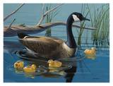 Canadian Goose Art by Keith Freeman