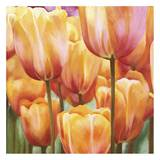 Spring Tulips II Prints by Luca Villa