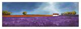 Field of lavender Print by Philip Bloom