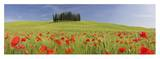 Cypress Trees in Meadow, Tuscany Prints by Frank Lukasseck