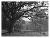 Autumnal Scene at Ashton Court Park Poster von Mark Bolton