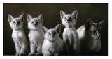Balinese Cat and Kittens Prints by Yann Arthus-Bertrand