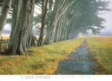Eucalyptus Fog Prints by Loren Soderberg