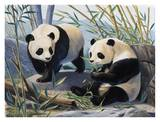 Pandas Print by Keith Freeman