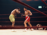 Muhammad Ali and Joe Frazier, &quot;Fight of the Year&quot;, March 8, 1971 Photographic Print by Moneta Sleet
