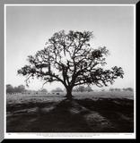 Oak Tree, Sunrise Mounted Print by Ansel Adams