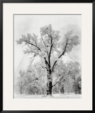 Oak Tree, Snowstorm, Yosemite National Park, 1948 Poster by Ansel Adams
