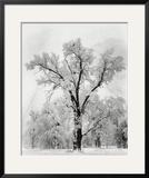 Oak Tree, Snowstorm, Yosemite National Park, 1948 Art Print by Ansel Adams