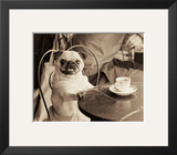 Cafe Pug Poster by Jim Dratfield
