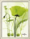 Coquelicot Vert II Print by  Marthe