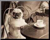 Cafe Pug Druck aufgezogen auf Holzplatte von Jim Dratfield