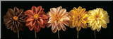Floral Salute Umocowany wydruk autor Assaf Frank