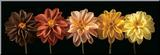 Floral Salute Druck aufgezogen auf Holzplatte von Assaf Frank
