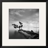 Water Tree Print by Moises Levy