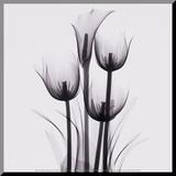 Tulips and Arum Lily Druck aufgezogen auf Holzplatte von Marianne Haas