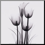 Tulips and Arum Lily Mounted Print by Marianne Haas