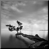 Drzewo w wodzie Umocowany wydruk autor Moises Levy