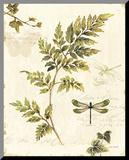Ivies and Ferns III Umocowany wydruk autor Lisa Audit