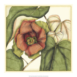 Tropical Blooms and Foliage IV Premium Giclee Print by Jennifer Goldberger