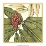 Tropical Blooms and Foliage II Giclee-tryk i høj kvalitet af Jennifer Goldberger