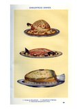 Mrs Beeton's Cookery Book - Chaudfroid Dishes Giclee Print