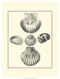Studies in Symmetry V Prints by M. Knorr