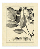 Vintage Botanical Study V Poster by Charles Francois Sellier