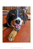 Bernese Puppy Prints by Robert Mcclintock